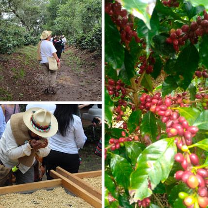 Tour del café en Xico y Coatepec, desde Veracruz y Boca del Río