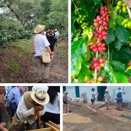 Tour del cafe desde Veracruz o Xalapa